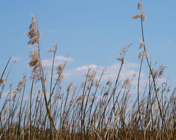 Gräser unter blauem Himmel